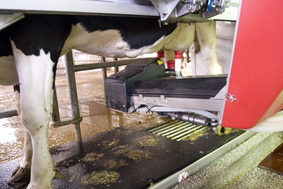 Le robot de traite dans une exploitation laitière