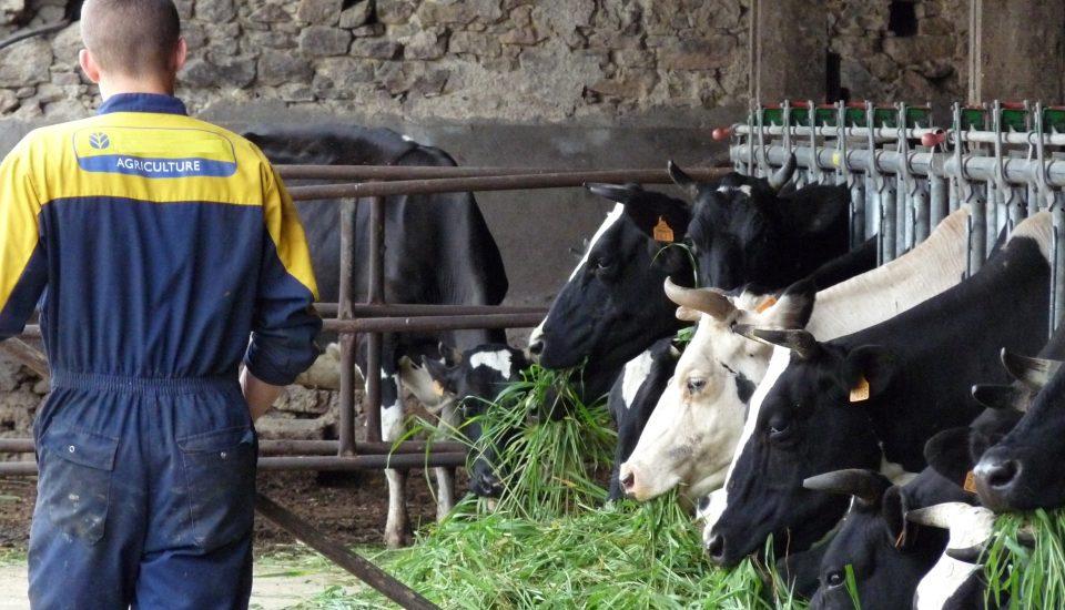 Apprendre le métier d'éleveur au cœur de l'exploitation