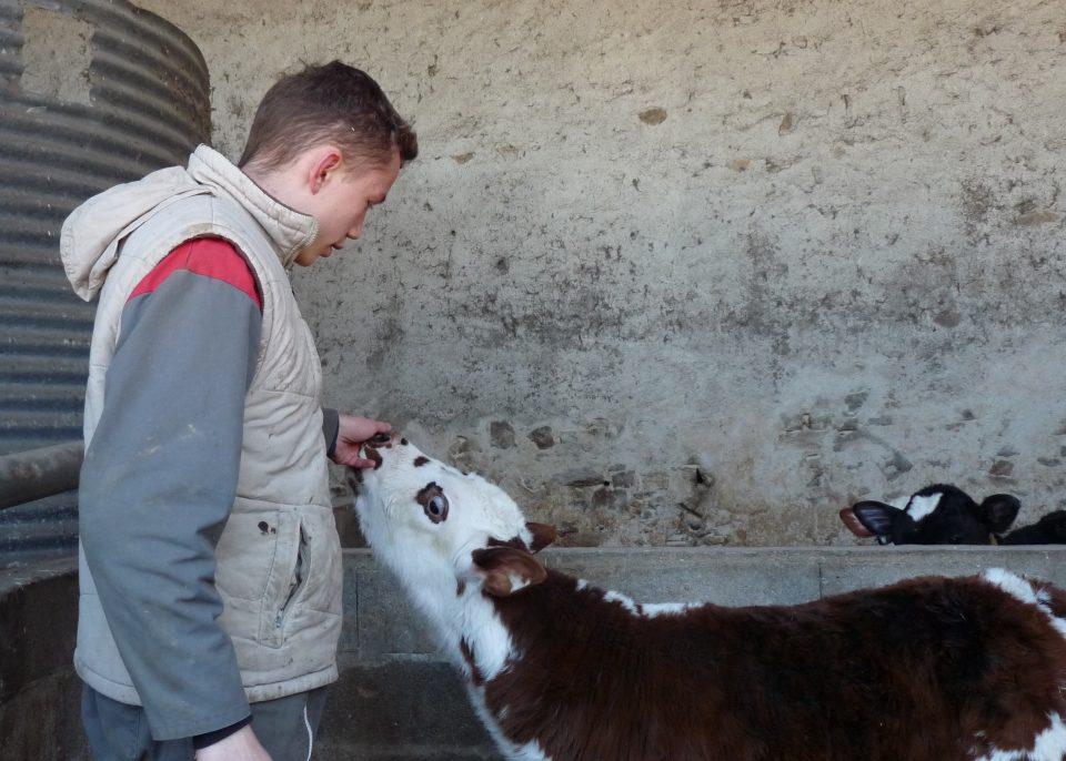 Valentin Werther futur éleveur de vaches laitières