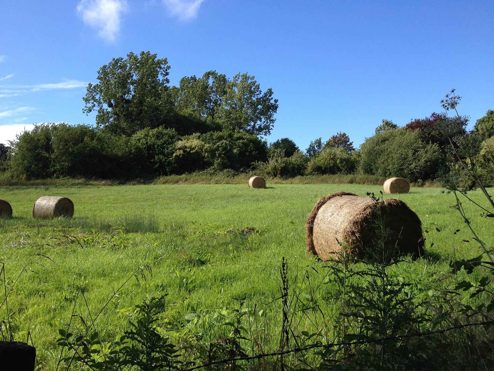 Agriculture durable, agriculture raisonnée : quelle différence ?
