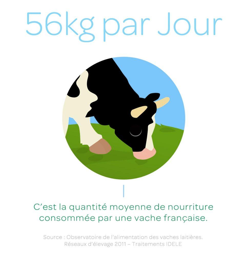 Quantité de nourriture vache laitière
