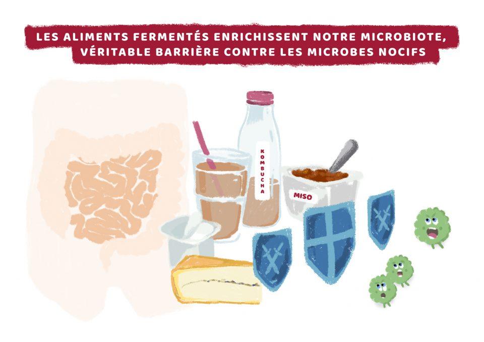certains aliments contribuent à enrichir le microbiote